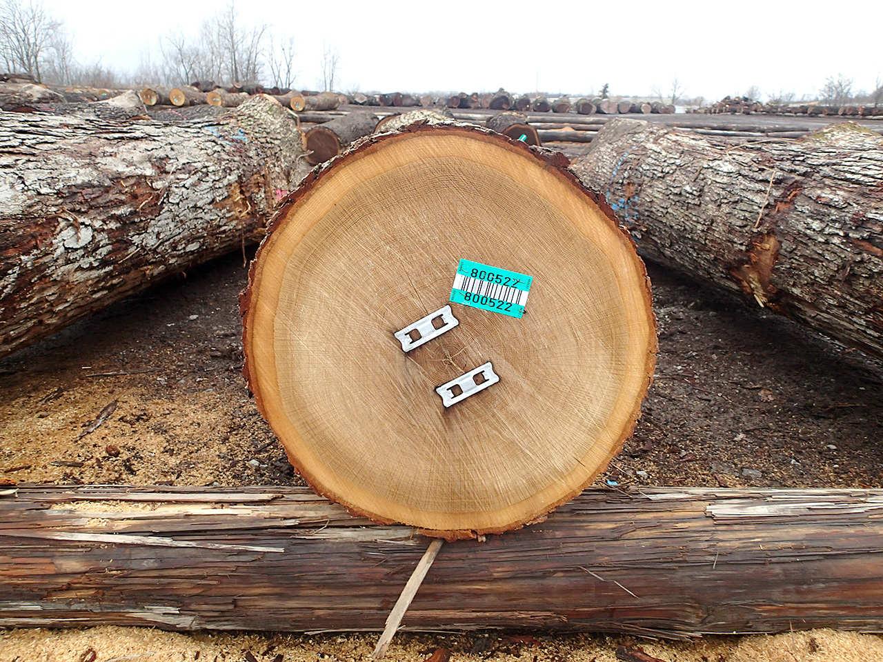 ブラックウオールナット原木:オハイオ州